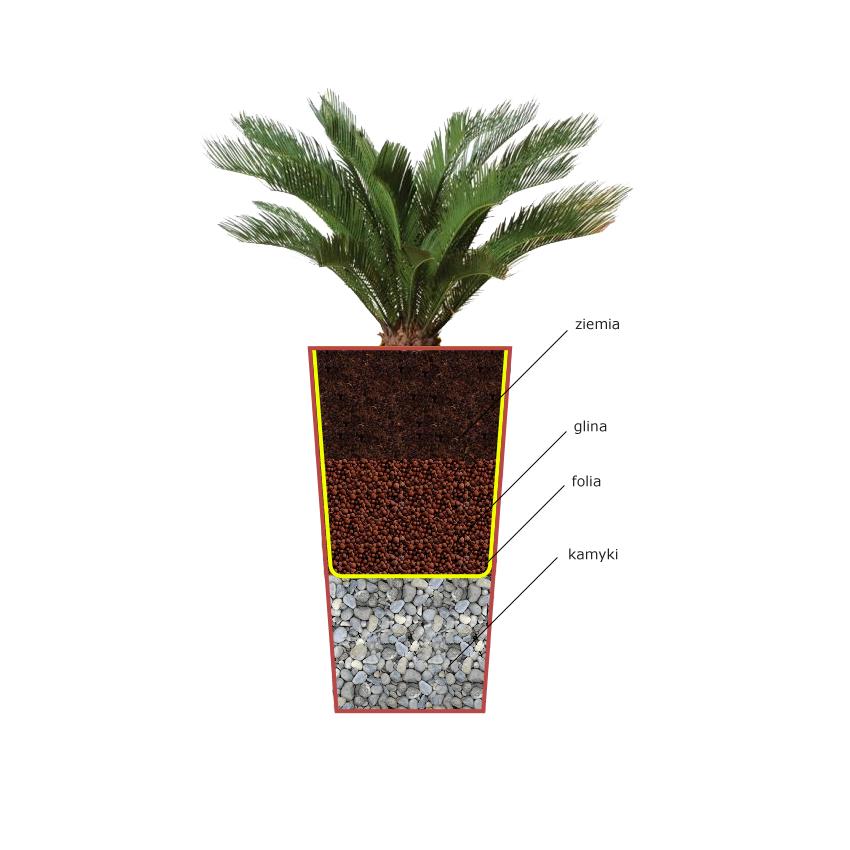Jak Sadzić Rośliny W Dużych Donicach Internetowy Sklep Meblowy